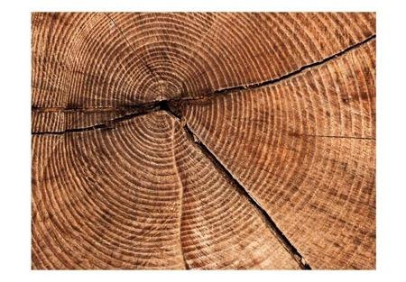 Fototapeta - Przekrój pnia drzewa