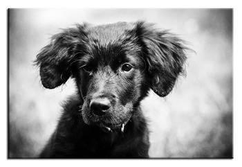 Obraz - Dogs&Cats 60x90 cm