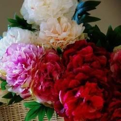Sztuczny kwiat piwonia jedwabna mix color H: 90 cm