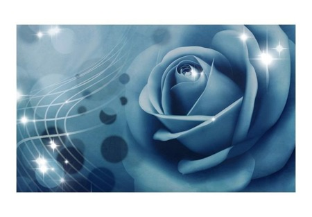 Fototapeta - Blue rose