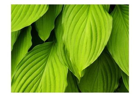 Fototapeta - Bright green leaves