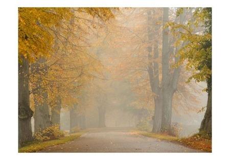Fototapeta - Drzewa - jesienny tunel