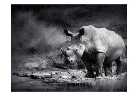 Fototapeta - Nosorożec w zadumie