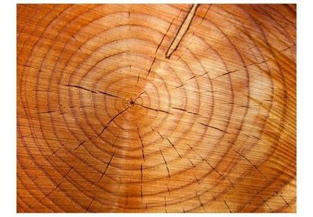 Fototapeta - Słoje na pniu drzewa