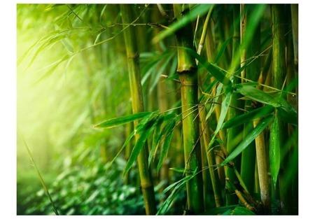 Fototapeta - dżungla - bambus